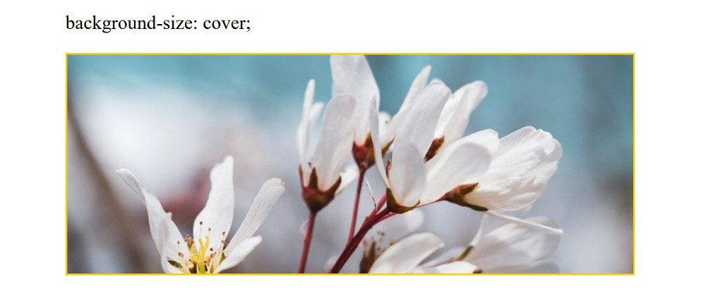 Abbildung - Responsive Bilder in Joomla - background-size: cover;