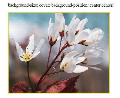 Abbildung - background-size: cover; background-position: center center