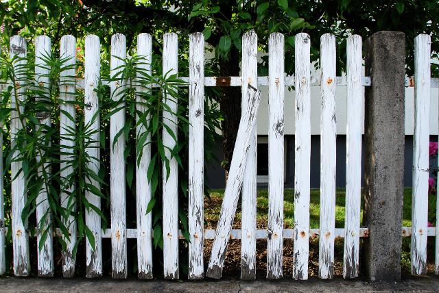 Abbildung - Gute Nachbarn